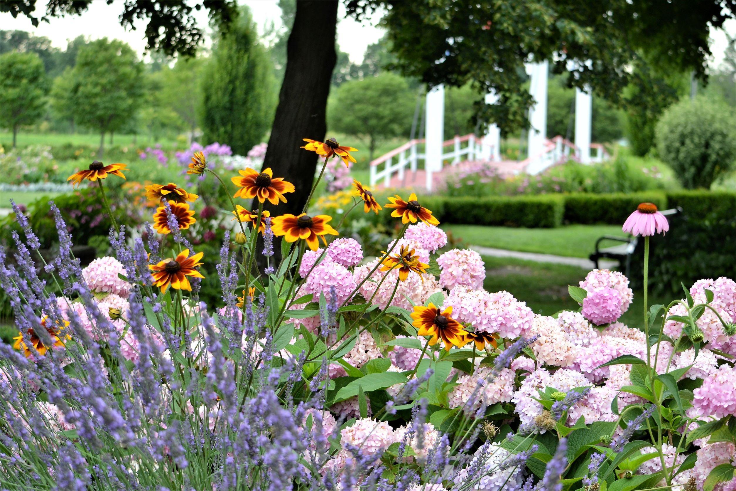 servizio di giardinaggio a spinea
